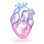 Drawing Human Heart PNG