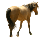 Horse – Cavalo PNG