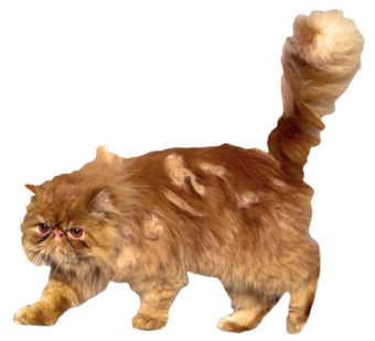Bichento Harry Potter PNG