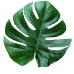 Picture Leaf PNG