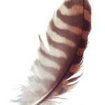 Figura Feather PNG
