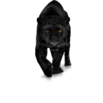 File Panther PNG