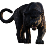 Photo Panther PNG